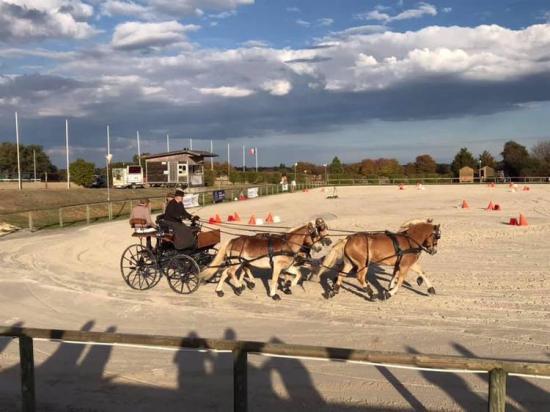 Rolf 4 poneys cdf