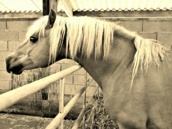 Winfer f